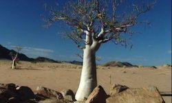 Pustinja Kalahari