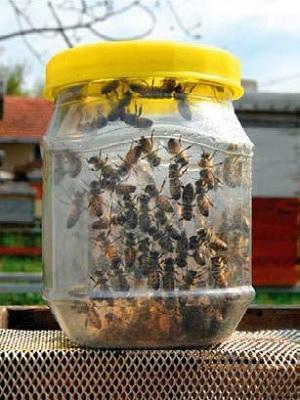 Uzorak živih pčela