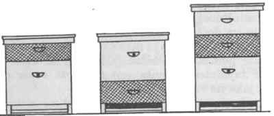 Izmjena dijelova u Dadantove košnice